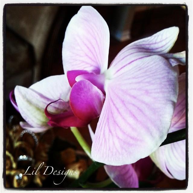 2013 Birthday Orchid